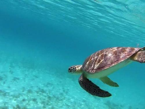 Snorkeling For Fish And Sea Turtles