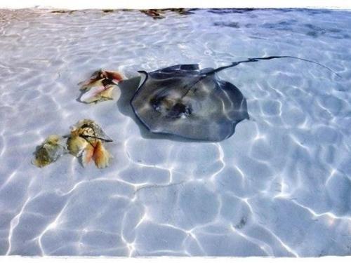 Swum With Stingrays