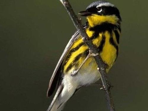 Exuma's Birds